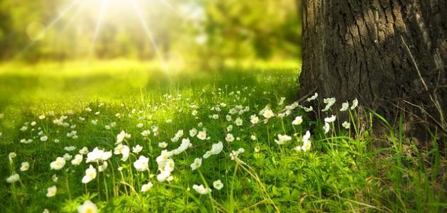 ما مفهوم الطبيعة
