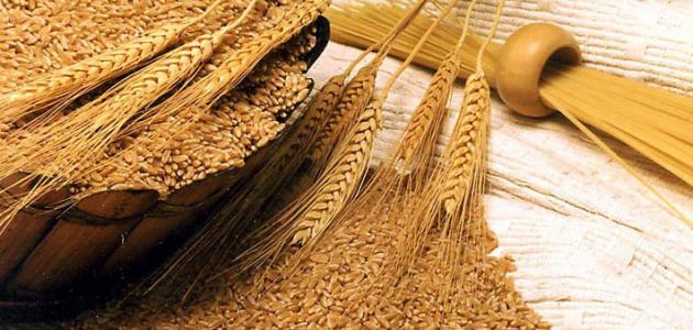 كيفية استخراج جنين القمح