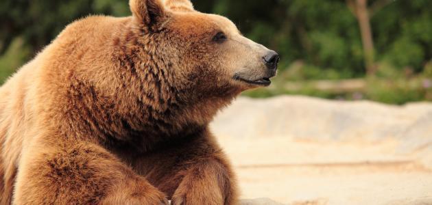كيفية المحافظة على الحيوانات من الانقراض