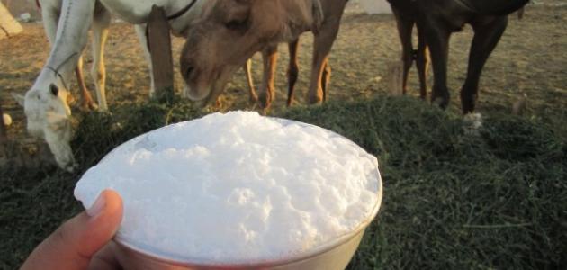 حليب الإبل وفيتامين د